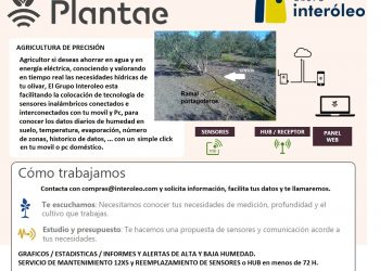 oferta de anuncio de plantae-1